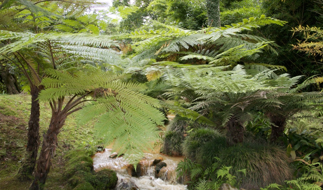 How to Grow and Care for Tree Ferns - Growing Guide