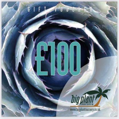 £100 Big Plant Nursery Gift Voucher