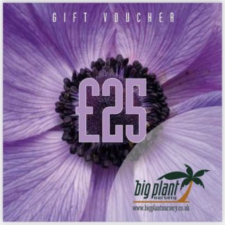 £25 Big Plant Nursery Gift Voucher