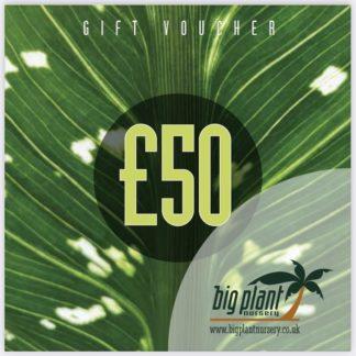 £50 Big Plant Nursery Gift Voucher